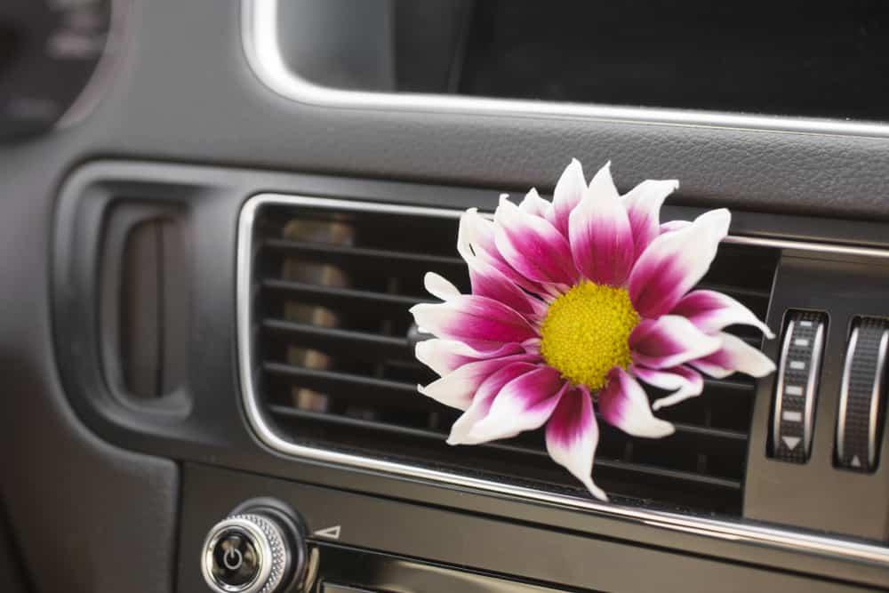 fiore sull'abitacolo - igienizzazione auto