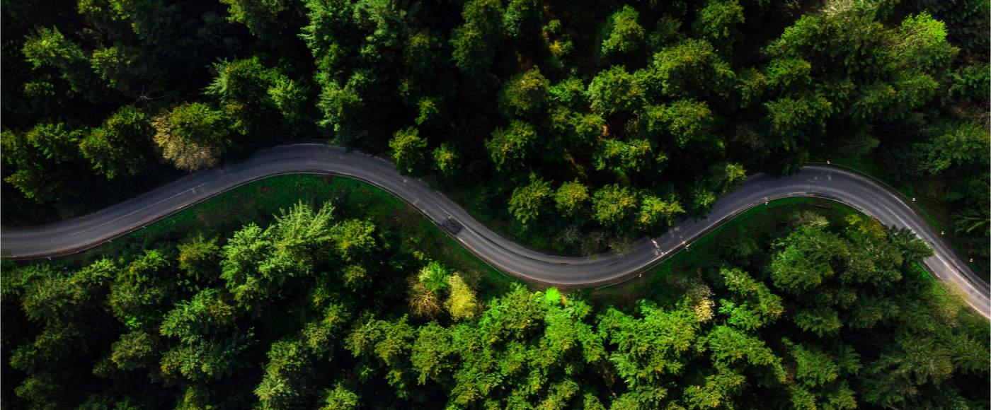 strada in mezzo agli alberi