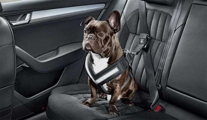 cinture di sicurezza per gli animali